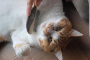 臆病なモー♂ネコをつかまえてノミとり。なぜかおびえていない?