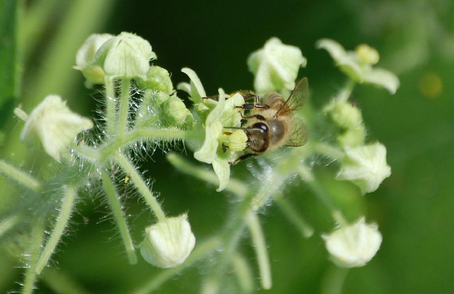 久しぶりの晴れ間ですから、ハチも大忙し