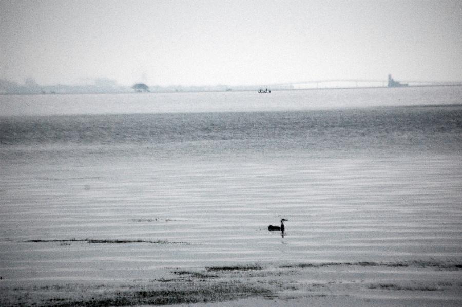 墨絵のような琵琶湖南湖