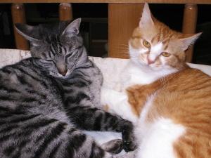 メイ♀ネコとモー♂ネコ