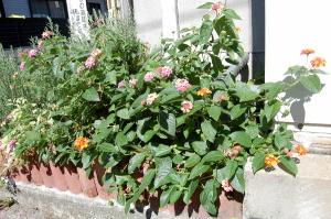 街角の花壇に気になる花を見つけました