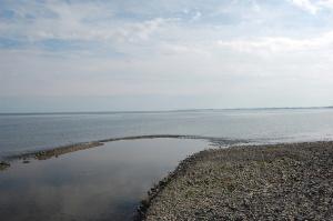 琵琶湖の今津川河口:とくになんということもありません