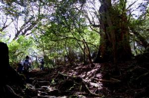 もののけ姫の森をあるく@屋久島