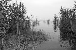 新旭の湖岸には水鳥の姿はありませんでした
