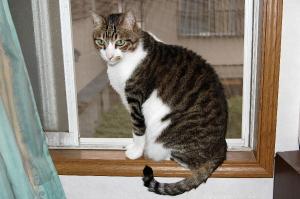 窓枠にとまっているムー♂ネコ