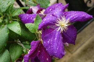 雨粒がつくる花模様