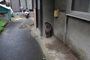 タヌキさん、こんなにひっそり立っているんです