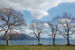 人気のない湖岸には寒さに耐える木々の姿がありました