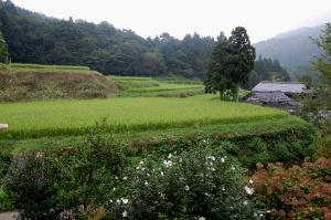 棚田の風景から ~高島市畑~
