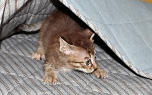 ネコというよりネズミに近かった頃のチー