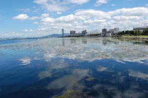 2007年9月17日の琵琶湖。湖面に藻が浮かんでいます。