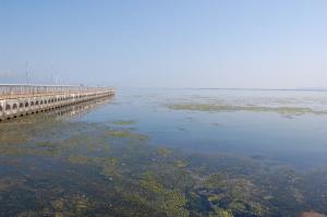 琵琶湖のなぎさ公園。湖面に藻がひろがって、きれいではありません。