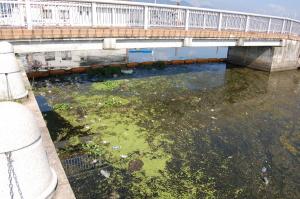 琵琶湖の汚れは見たくないですね。