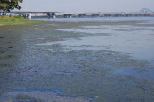 膳所公園と近江大橋が見えています