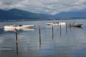 琵琶湖南湖で藻を回収する数隻の小船