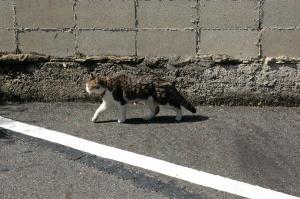 まちを歩けばネコに出会う・・・。