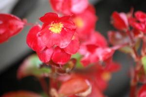 この花の名前、求む