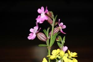 関宿のお店のテーブルの花です