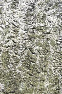 墓碑に刻まれた「十八番大隊」の文字(中央)