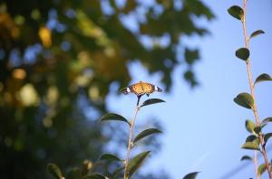 蝶々を見つけて