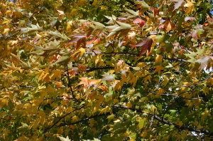 風に揺れるさまざまな色の葉