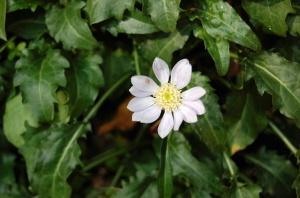 道端に咲く白い花