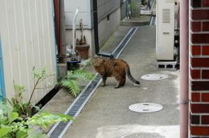 ひさしぶりにこのネコに出会う