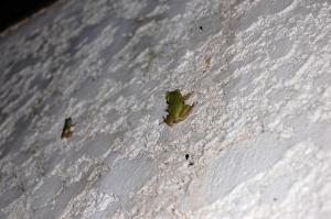 白い壁に緑のカエル