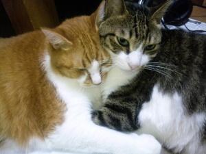 モー&ムーのネコメール