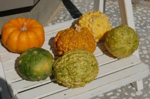 かぼちゃが6つ