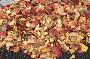吹き寄せられた落ち葉もきれいでした