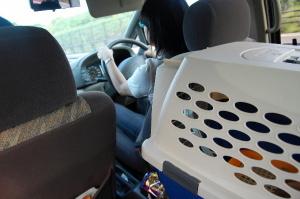 車で大分港まで走ります。おとなしいです、Qooは。