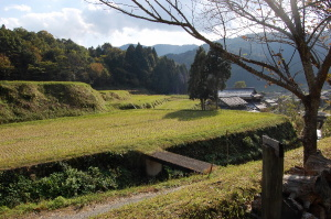 山間地のログハウスから棚田を撮りました