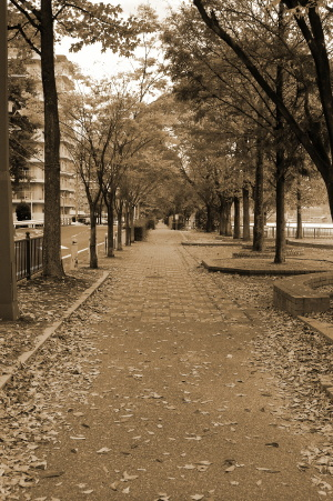 セピアが似合う11月の歩道
