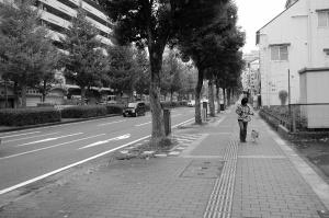 Qooとの散歩