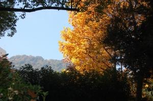 身近なところで秋を楽しむことができました