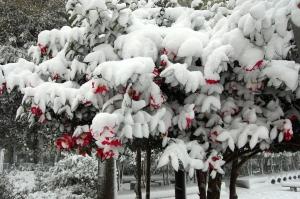 大晦日に雪が降りました